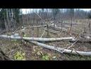 Охота на бобра с приманкой - прогулялись на лесопилку бобра с удовольствием, одного работягу - взяли