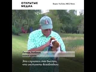 Американец спас щенка из пасти аллигатора и даже не уронил сигару_CNN_Florida