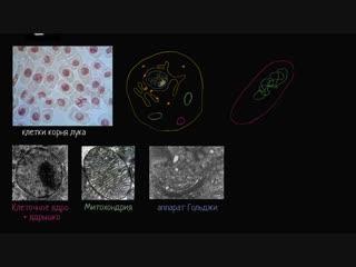 Прокариот и эукариот. Строение клетки. Биология (часть 3)