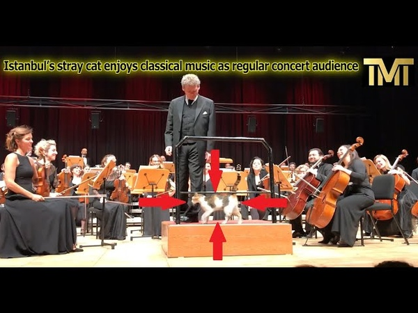 Istanbul's stray cat enjoys classical music as regular concert audience