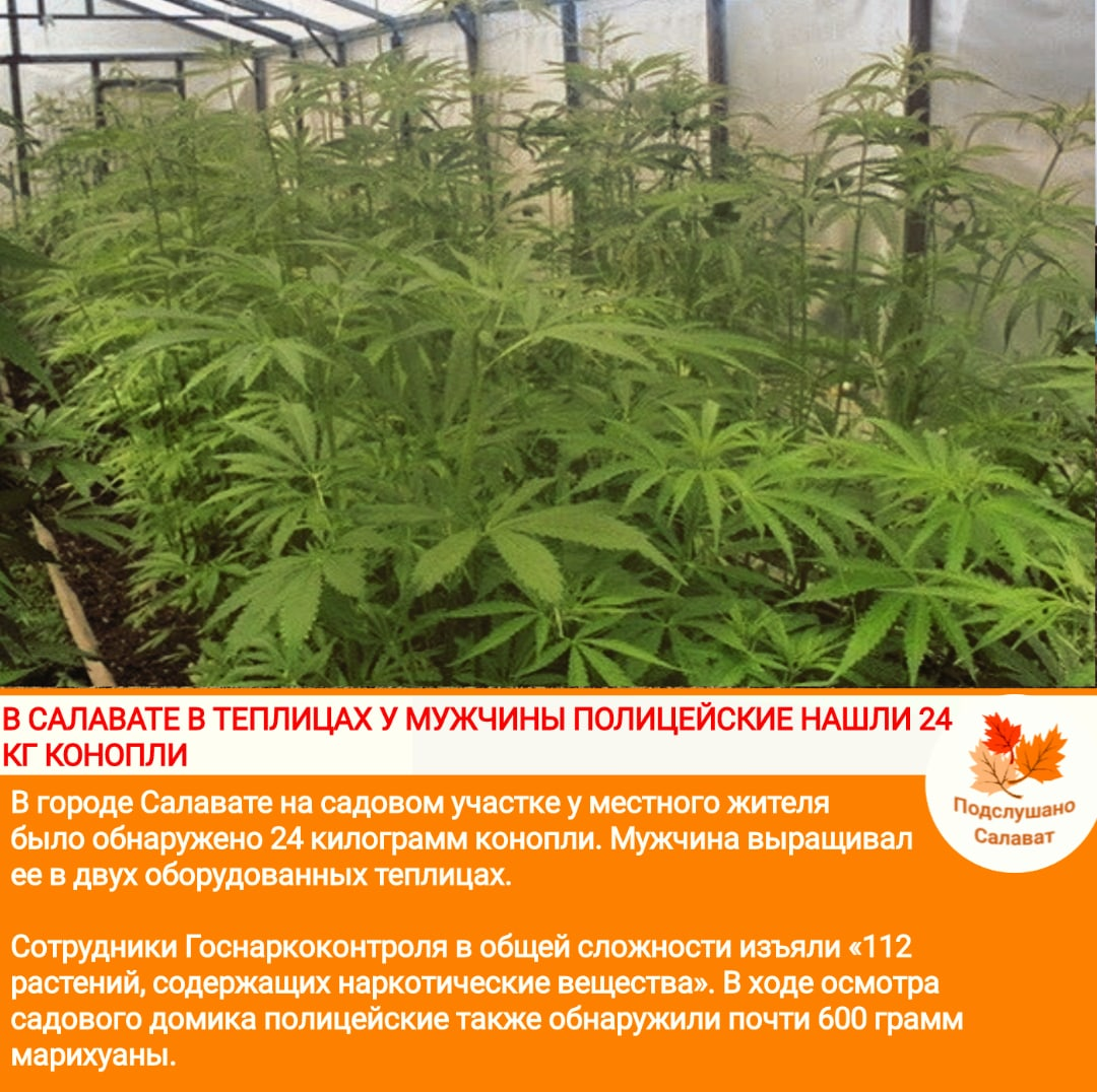 Выращивания конопли схема весит марихуана