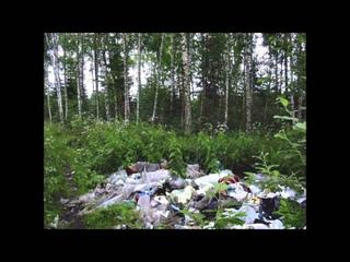 """Социальный рекламный ролик """"Сохраним елку в лесу"""""""