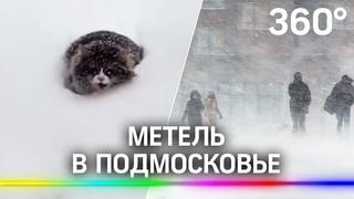 Жители Подмосковья делятся фото и видео рекордного снегопада