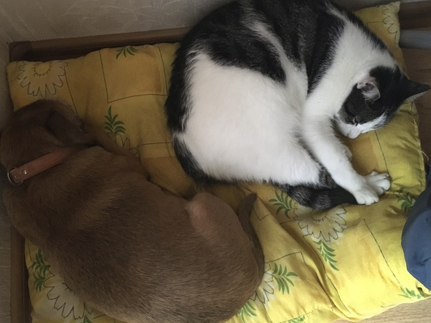 кот-собаке-друг-ермилова-дарья