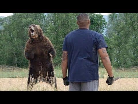Medvědice přišla pro pomoc k člověku i když tím riskovala život aby zachránila své mládě