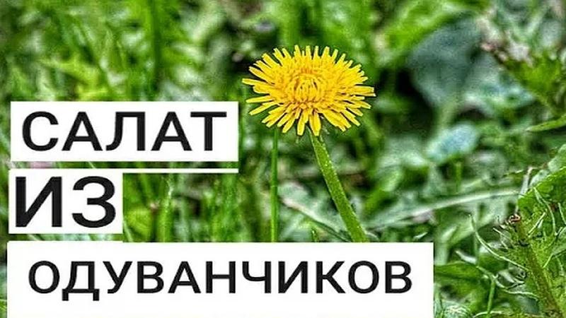 Салат из Одуванчиков Как Приготовить Полезный Весенний Корейский Салат за 0 рублей