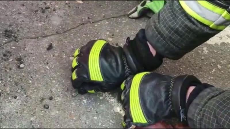 Спасатели Московского авиацентра извлекли змею из автомобиля