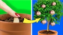 34 PLANT AND GARDENING HACKS GROW YOUR OWN FRUITS ANS VEGETABLES