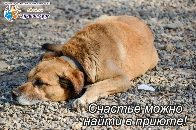 Самая большая помощь, которую Вы можете оказать – это взять животное из приюта д...