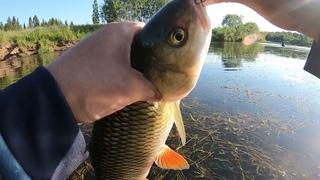 Килограммовый голавль! Ловля голавля и хариуса на ультралайт. Рыба с первого заброса.