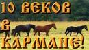 От финно-угров до СССР. Коп с X-Terra 705