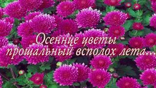 Осенние цветы. Видеозарисовка