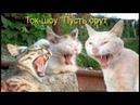 Веселые картинки. Смешные коты с надписями ржачные.
