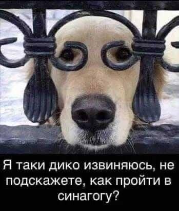 https://sun9-28.userapi.com/c635106/v635106158/4646a/IlLkN74b9Ik.jpg