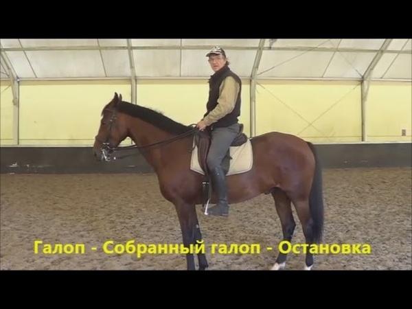 Конный спорт обучение Галоп Собр галоп Остановка Кизимов