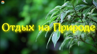 Шум Дождя Для Глубокого Сна / Расслабляющий Звук Дождя 5 часов / Relaxing Nature Video  Ultra HD