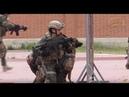 Impresionante ejercicio práctico con perros militares ataque y detección de explosivos