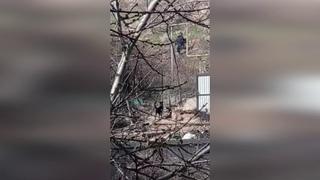 Подопечная собака напала на хозяйку приюта в Севастополе