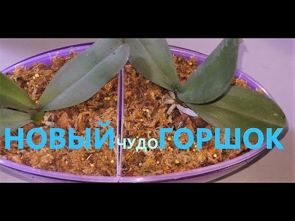Phal Sogo Yukidian пересадка Новый домик для двоих Тестирую чудесный горшок для орхидей