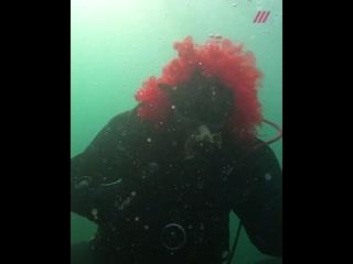 Новый год на дне. Крымские дайверы станцевали подводный хоровод вокруг елки