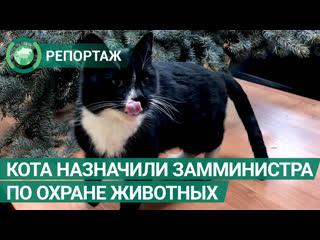 Спасенного кота из Ульяновска назначили замминистра по охране животного мира. ФАН-ТВ