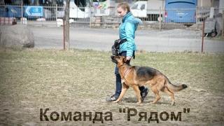 Дрессировка собаки: Команда Рядом