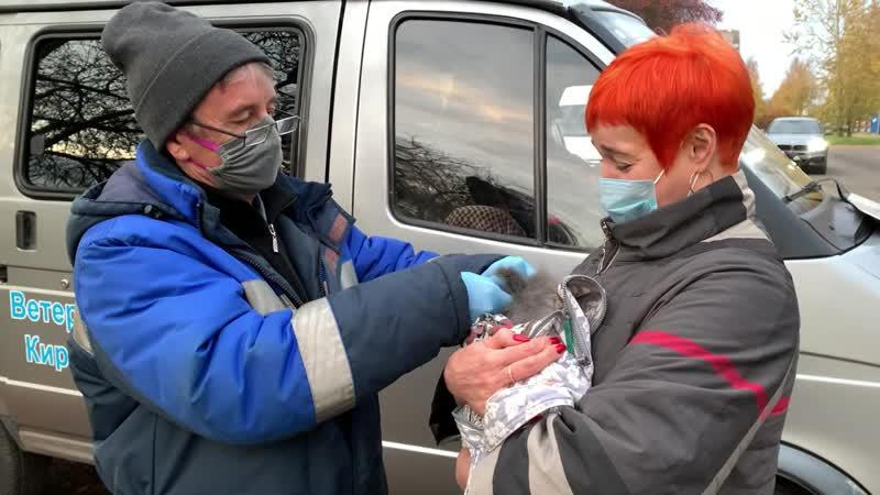 Выездная вакцинация домашних животных от бешенства