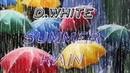D. White - Summer rain (NEW SONG 2020)