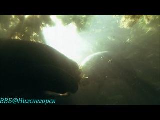 Дискавери Экватор Реки солнца Rivers of the Sun