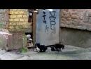 бешеные котята
