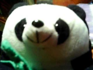 Панда поет песню группы Градусы - Я больше никогда!