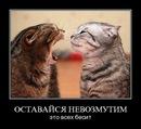 Фотоальбом Ольги Литвиненко