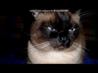 Мой кот Барсик под музыку Урюрюрюрю - Накури Кота :3. Picrolla