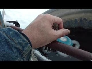 Американец спас примерзшего к трубе воробья
