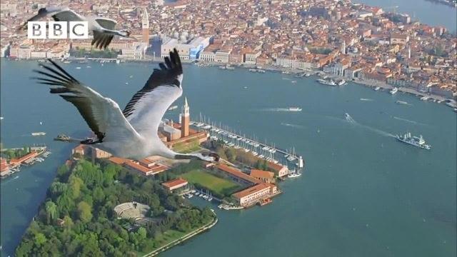 Birds (Earthflight, 2011-2012)