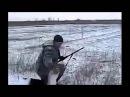 ПРИКОЛ ! охота на зайца