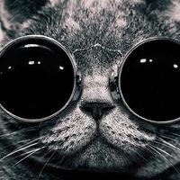 Котик Семицветик