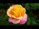 BEAUTIFUL ROSES - ERNESTO CORTAZAR - LOST WITHOUT YOU