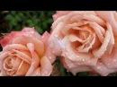 П.И.Чайковский - Вальс цветов - Tchaikovsky - Waltz of the Flowers