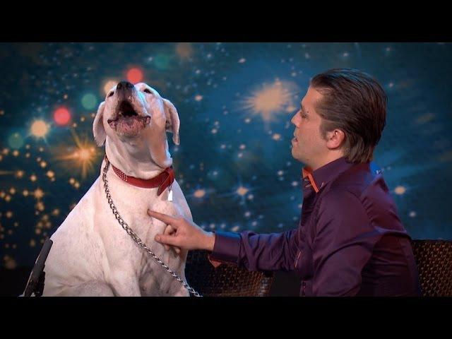 Dog sings Whitney Houston Belgium's Got Talent VTM