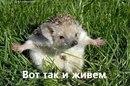 Фотоальбом Андрея Сумарокова