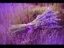 Joshua Bell Ladies in Lavender (soundtrack) - Джошуа Белл Дамы в лиловом
