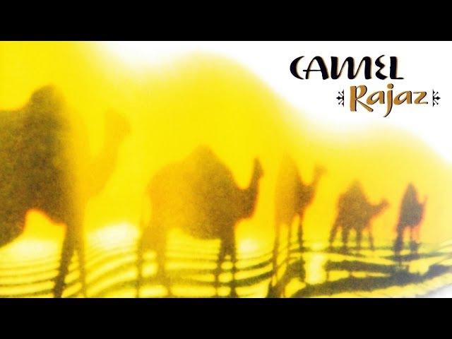 Camel Sahara