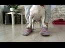 Джек Рассел Терьер Ирж прикольные трюки Dog tricks