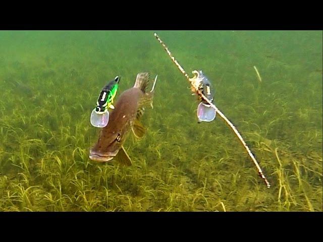 Pike attack Mike Ricky fishing lures Gäddfiske Рыбалка щука атакует рыболовные приманки