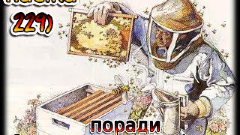 поради бджолярам початківцям рамки