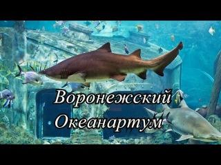 Воронежский Океанариум - самый большой в Центральном Черноземье