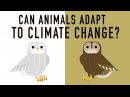 Can wildlife adapt to climate change? - Erin Eastwood