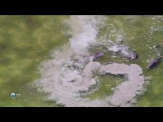 BBC Удивительный мир животных (03). Дельфины (Познавательный, природа, 2014)
