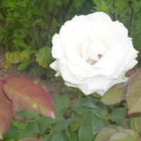 Голубкова Марина (Черная)